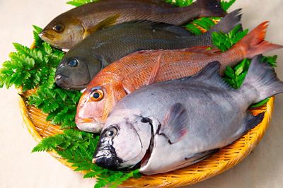 〈シマリエ12選〉網元清兵衛 鮮魚ボックス