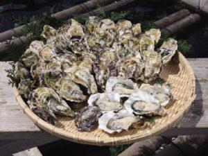 冬の味覚を長崎ならではの食べ方で! プリッとした牡蠣を思う存分堪能して