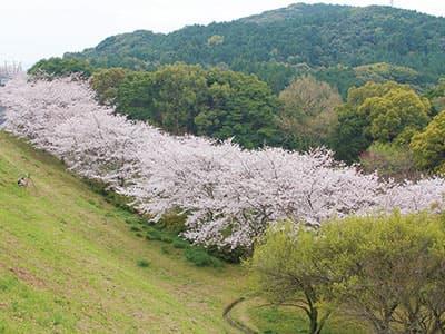 花の森公園
