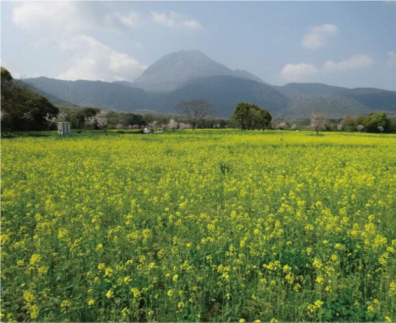 しまばら火張山花公園春の花まつり