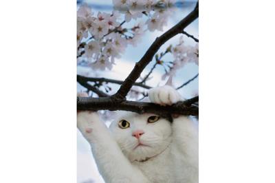 岩合光昭ミニ写真展<br>ねこ歩き日本編