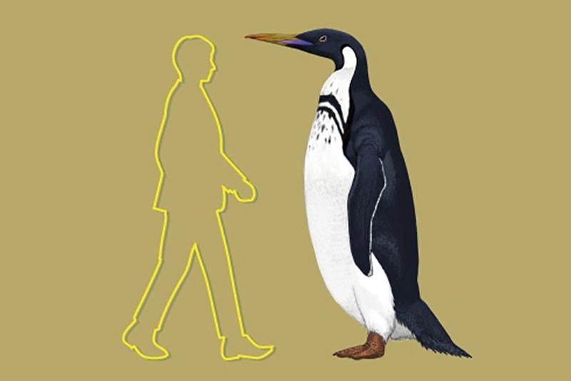 長崎ペンギン水族館 夏の特別企画展<br>「太古のペンギン展~ペンギンは大きかった~」