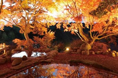 三十路苑の紅葉【雲仙市】