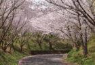 七ツ釜鍾乳洞界隈 櫻と菜の花まつり 2019/3/31(日)