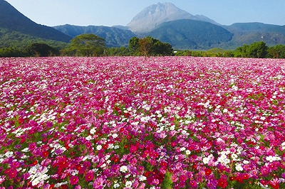 しまばら 火張山花公園