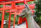 """〈諏訪神社vol.5〉絶対見逃せない!長崎のマストイベント 諏訪神社""""くんち""""のおはなし。①"""