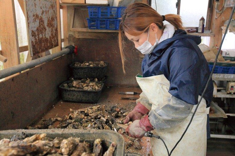 カキを出荷前に泥や付着した生物を一つずつ取り除く様子