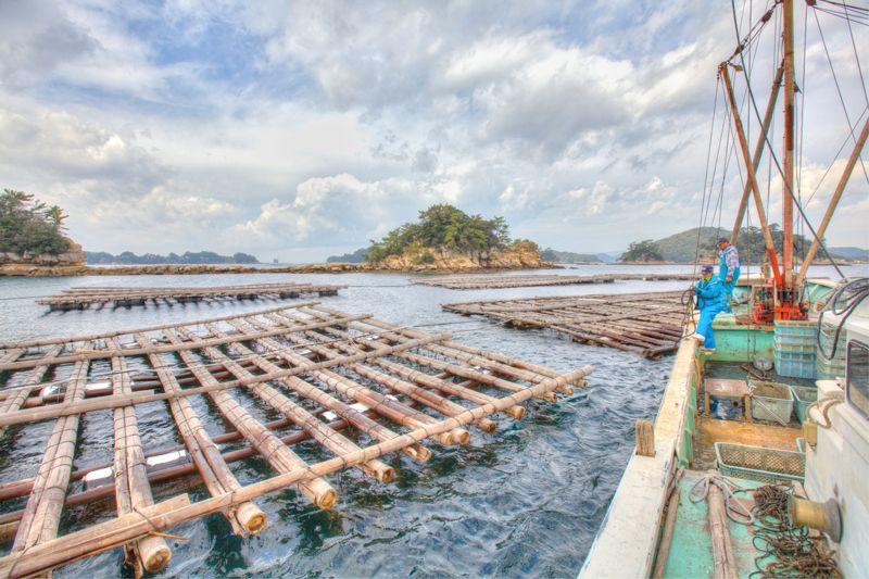 縦8m×横13mのイカダで2万個のカキを養殖