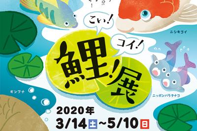 【臨時休業】海きらら 春の特別展「こい!コイ!鯉!展」2020/3/14(土)~5/10(日)
