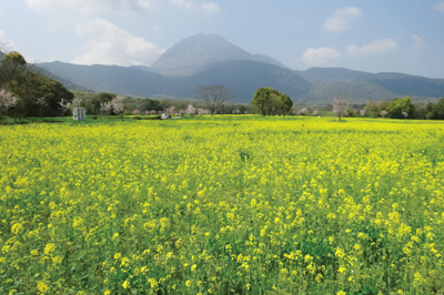長崎県 島原市 花まつり